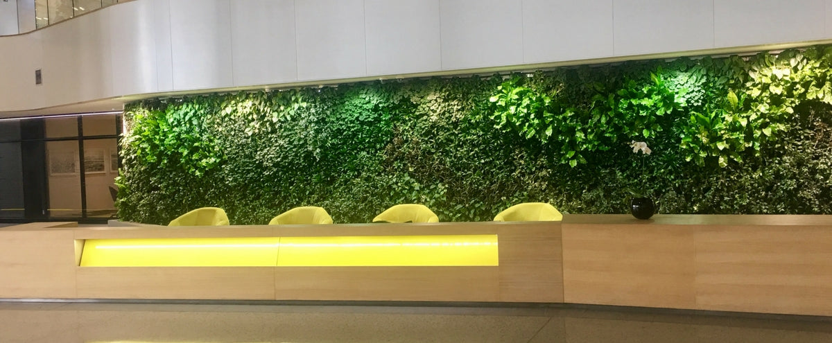 Green walls are a great decor idea for offices looking to bring the outdoors inside