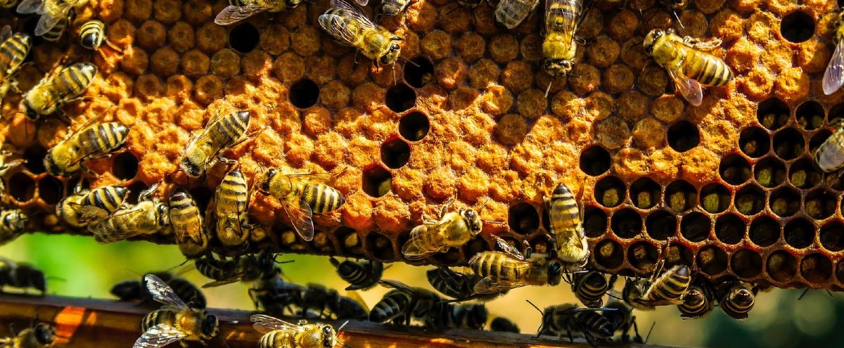 Why the honeycomb is nature's favourite pattern