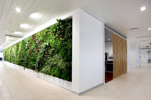 How do green walls benefit our health and the environment?