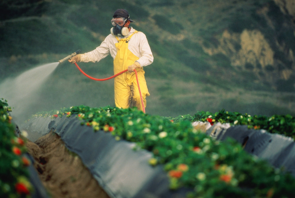 Growup vertical farming | man spraying crops with pesticides