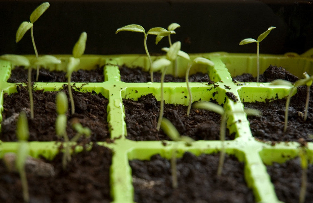 Growup vertical farming | seedling tray