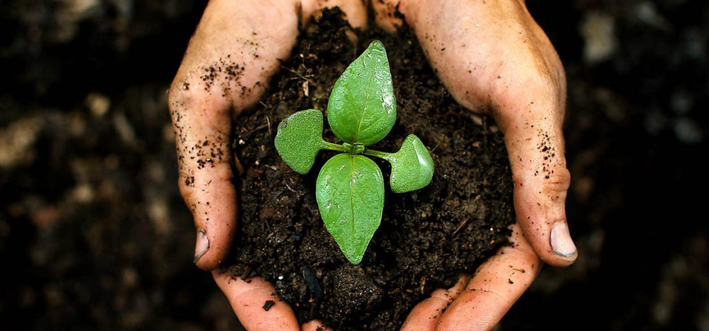 Growup vertical farming | hands planting a seedling