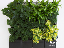 GrowUp Greenwall Kit - 4' Wide x 4' Tall - Recirculating