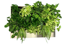 FREEDOM Greenwall system - Including plants - Soft Green