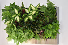 FREEDOM Greenwall system - Including plants