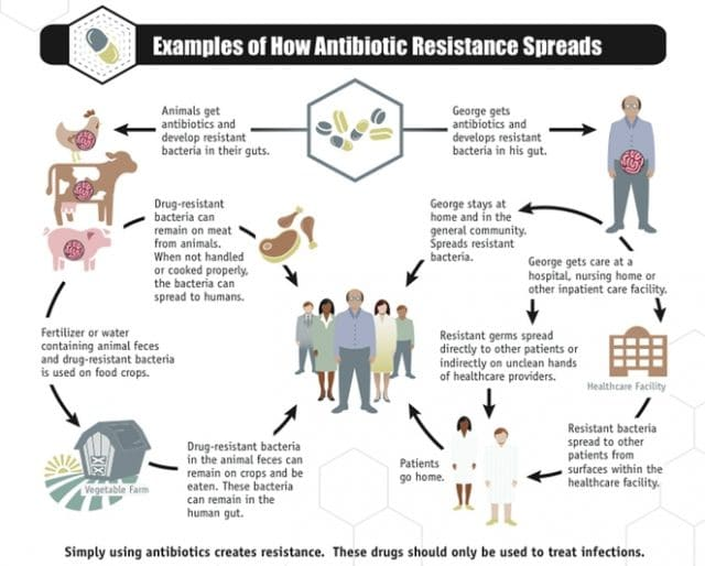 cdc antibiotic