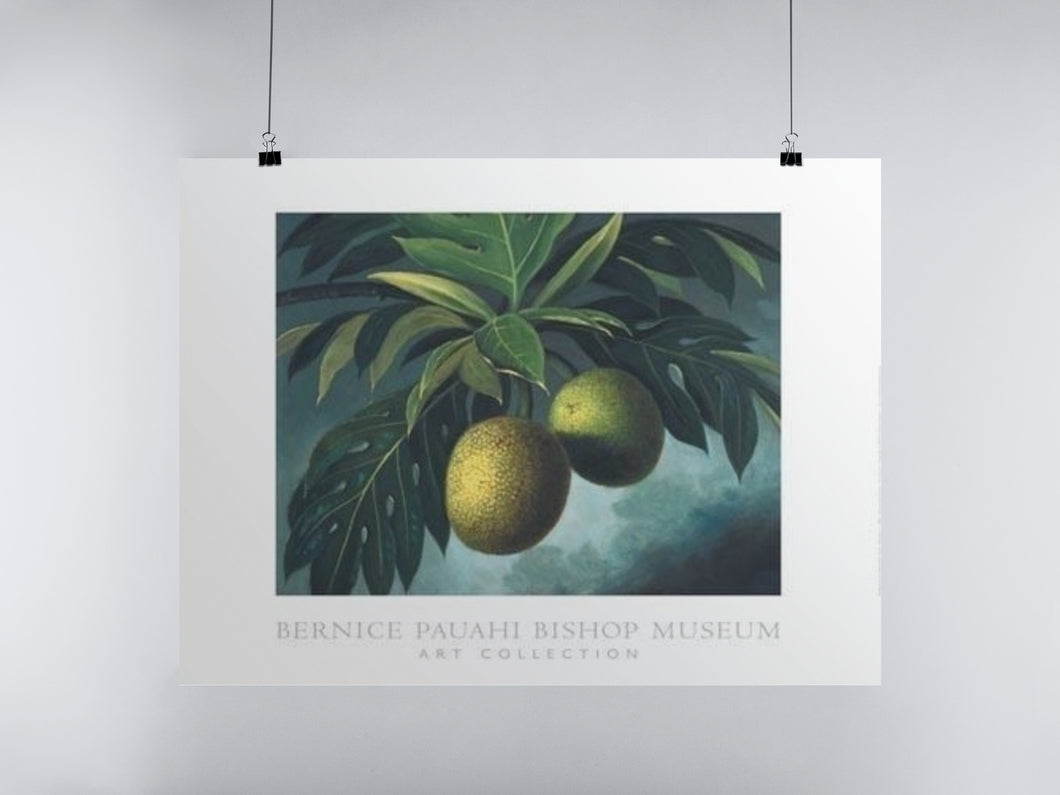 Breadfruit (Poster)