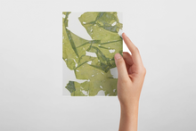 Isabella Aiona Abbott Hawaiian Marine Algae Notecards