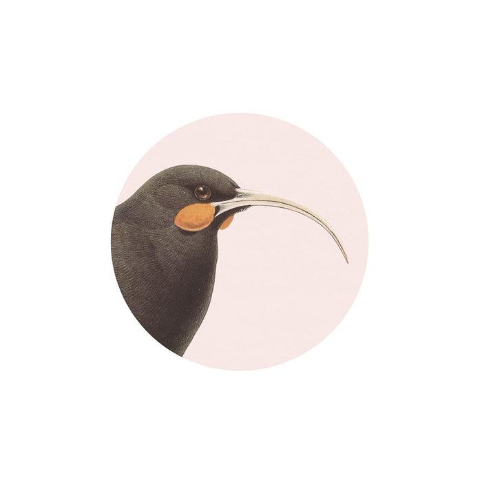 Hused Huia Coaster