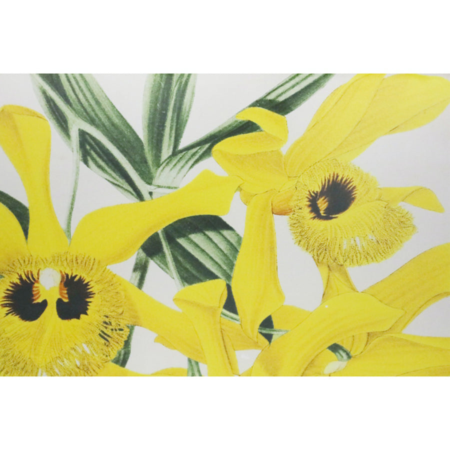 Yellow Orchid Framed Print 01
