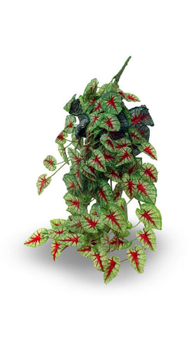 Pangea Caladium Hanging Bush