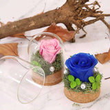 Preserved Roses Flower in Glass Dome Gift for Anniversary - Funy Flower