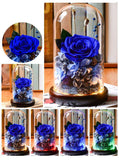 Preserved Rose Flower Gift In Glass Dome - funyflower