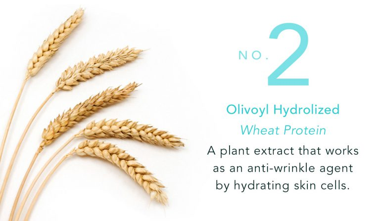 Olivoyl Hydrolized - Wheat Protein - A plant extract that works as an anti-wrinkle agent by hydrating skin cells