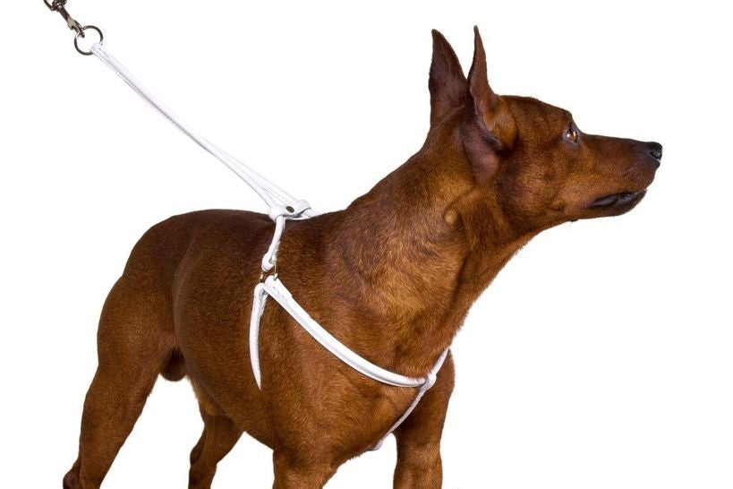 Rolled Leather Harness - White