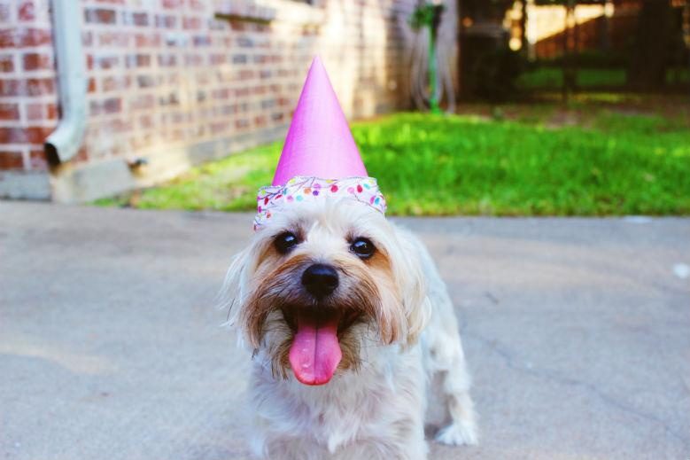 Throwing A Birthday Party For Your Dog Can Be Great Way To Celebrate With Canine Companions And Their Human Friends Sure Is More