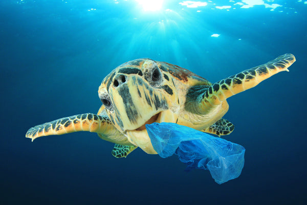 How to use less single-use plastic