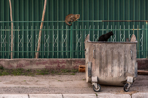 broken metal wheelie bin and cats