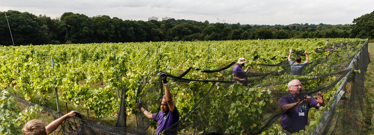 volunteers in forty hall vineyard
