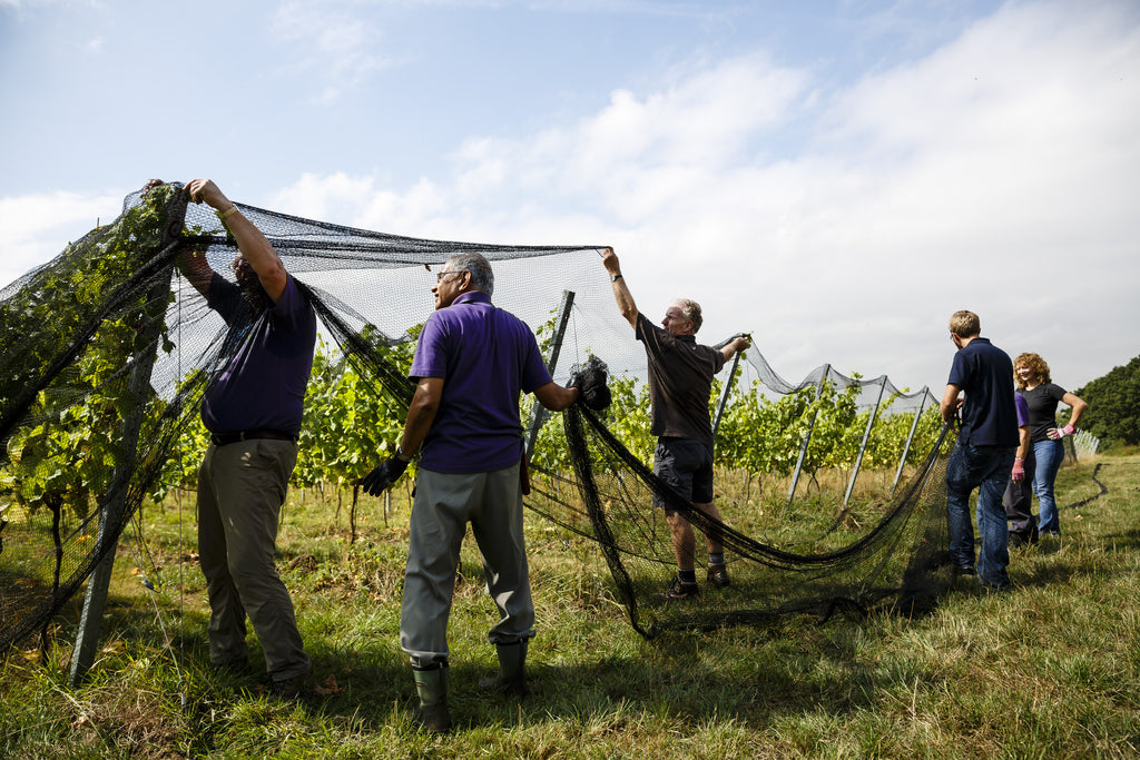 Donate to Forty Hall Vineyard