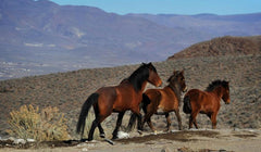 American wild horses Happy Hooves blog with Equissimo