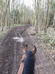 Equissimo dutch dressage hacking in woods