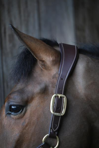 Kentucky Horsewear Leather Anatomic Halter