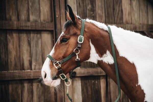 Kentucky Horsewear Plaited headcollar and lead