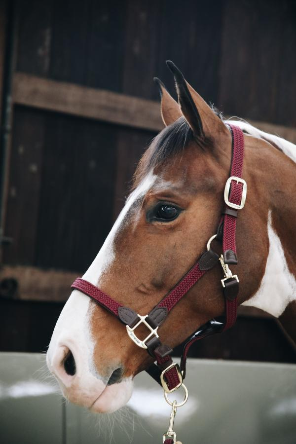 Kentucky Horsewear Plaited headcollar red