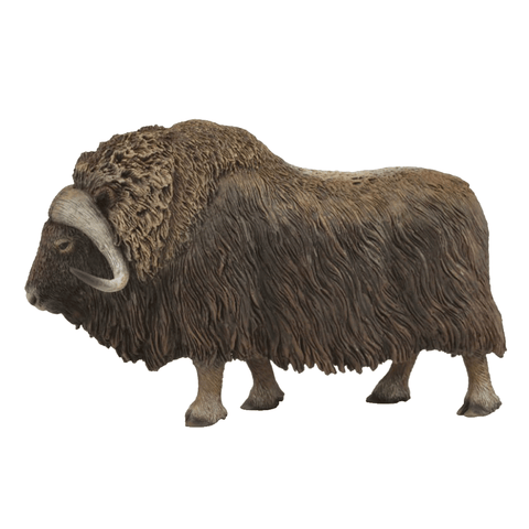 CollectA Musk Ox Bull  88837 New Release 2018
