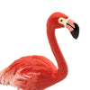 Safari Ltd Flamingo - AnimalKingdoms.co.nz