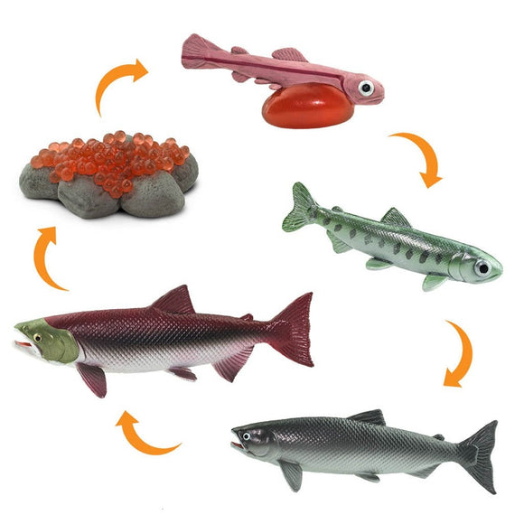 Safari Ltd Life Cycle Of A Salmon-SAF100267-Animal Kingdoms Toy Store