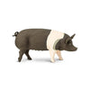 Safari Ltd Hampshire Pig - AnimalKingdoms.co.nz