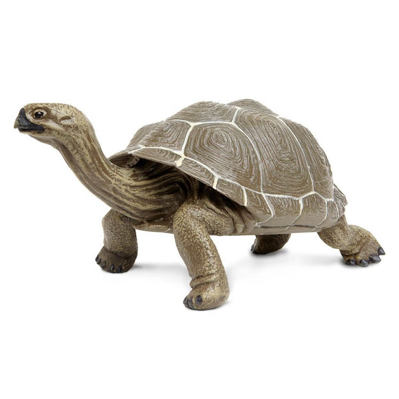 Safari Ltd Tortoise-SAF260729-Animal Kingdoms Toy Store