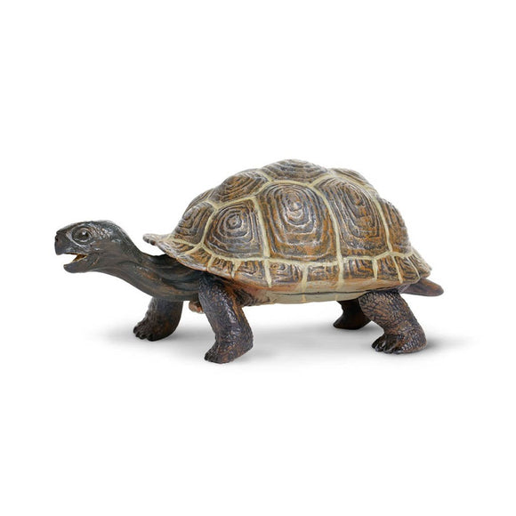 Safari Ltd Tortoise Baby - AnimalKingdoms.co.nz