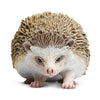 Safari Ltd Hedgehog - AnimalKingdoms.co.nz