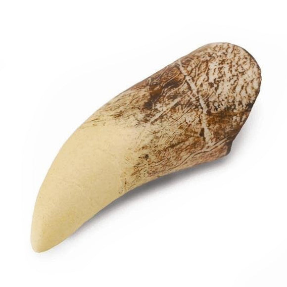 CollectA T Rex Tooth