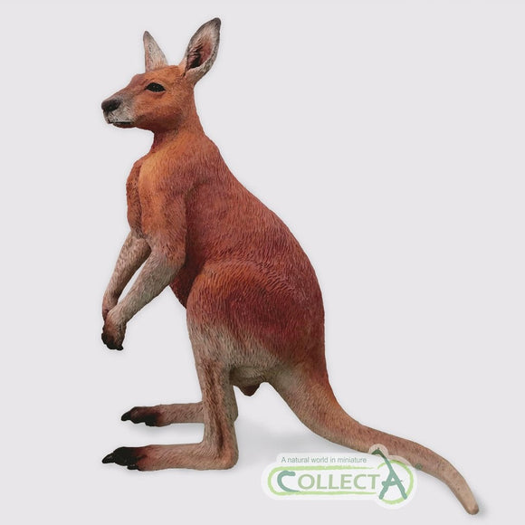 CollectA Kangaroo Male