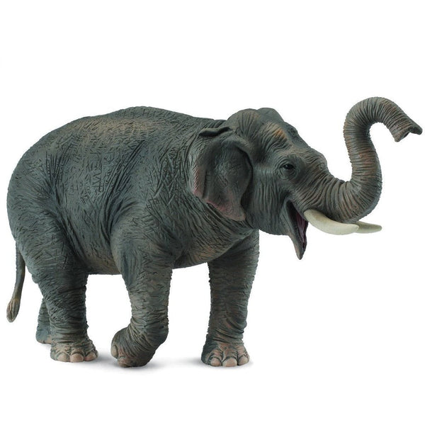 CollectA Asian Elephant - AnimalKingdoms.co.nz