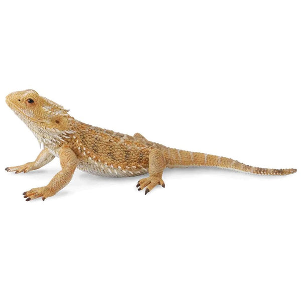 CollectA Bearded Dragon Lizard-88567-Animal Kingdoms Toy Store