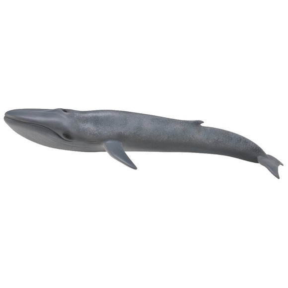 CollectA Blue Whale-88834-Animal Kingdoms Toy Store