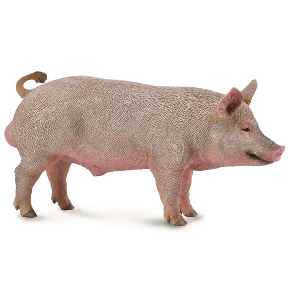CollectA Boar-88864-Animal Kingdoms Toy Store