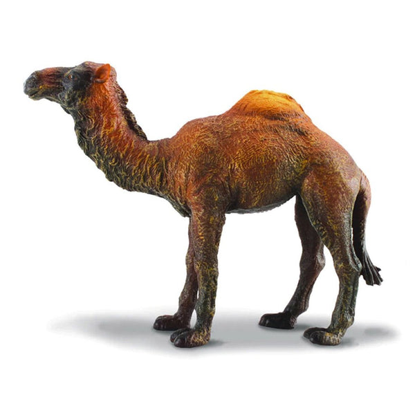 CollectA Dromedary Camel-88208-Animal Kingdoms Toy Store