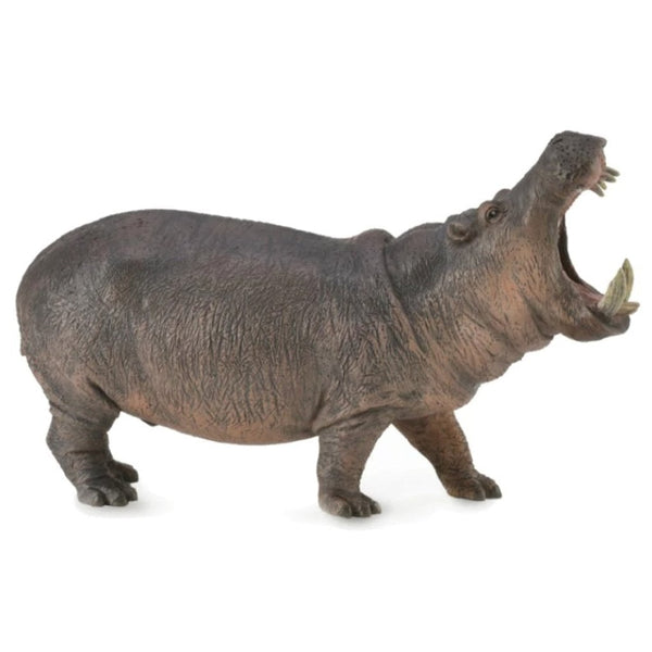 CollectA Hippopotamus - AnimalKingdoms.co.nz