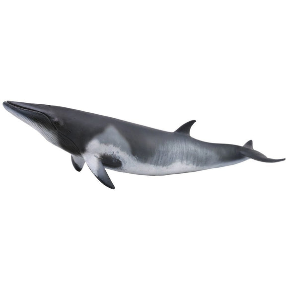 CollectA Minke Whale-88862-Animal Kingdoms Toy Store