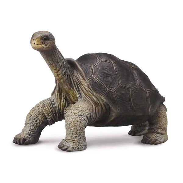 CollectA Pinta Island Tortoise-88619-Animal Kingdoms Toy Store