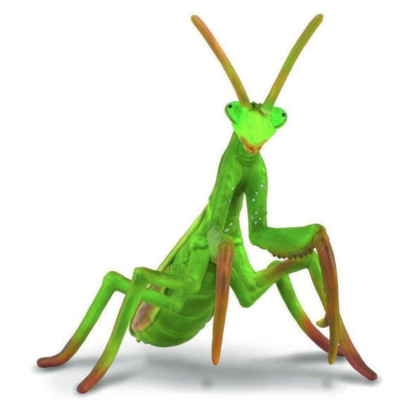 CollectA Praying Mantis - Insect - AnimalKingdoms.co.nz