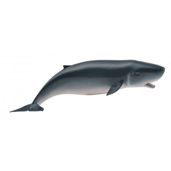 CollectA Pygmy Sperm Whale-88653-Animal Kingdoms Toy Store