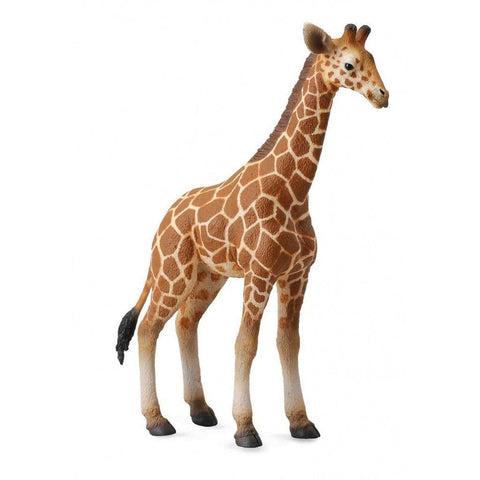 CollectA Reticulated Giraffe Calf - Wild Life - AnimalKingdoms.co.nz