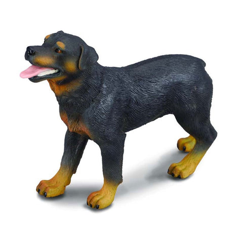 CollectA Rottweiler - Cats and Dogs - AnimalKingdoms.co.nz